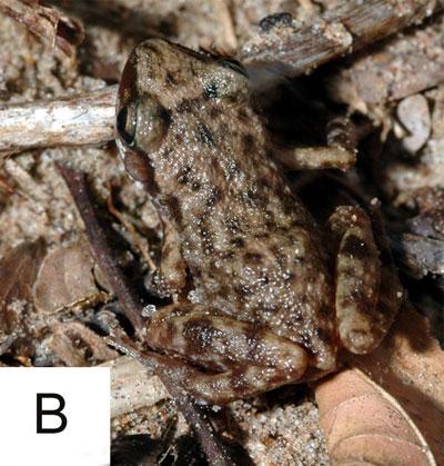 Fig1B